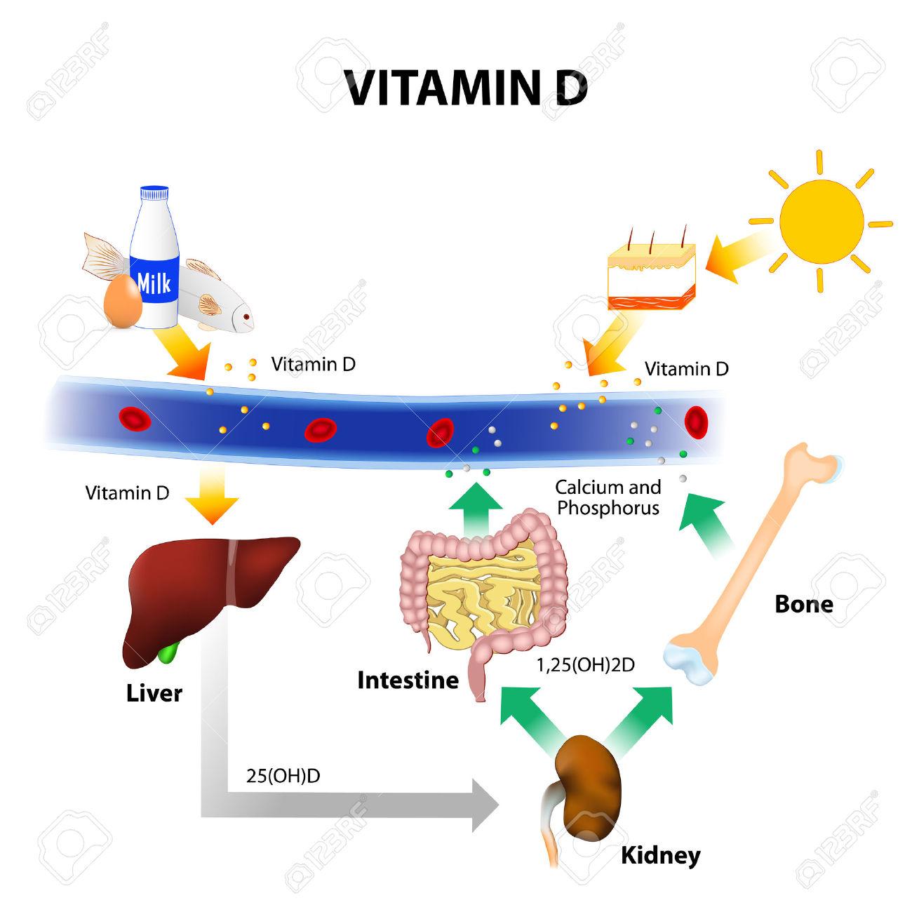 hoge dosis vitamine d3 naast chemo bij darmkanker geeft langere ziekteprogressie vrije tijd en. Black Bedroom Furniture Sets. Home Design Ideas